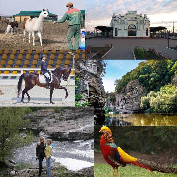Тур в Жашков и Золотой фазан